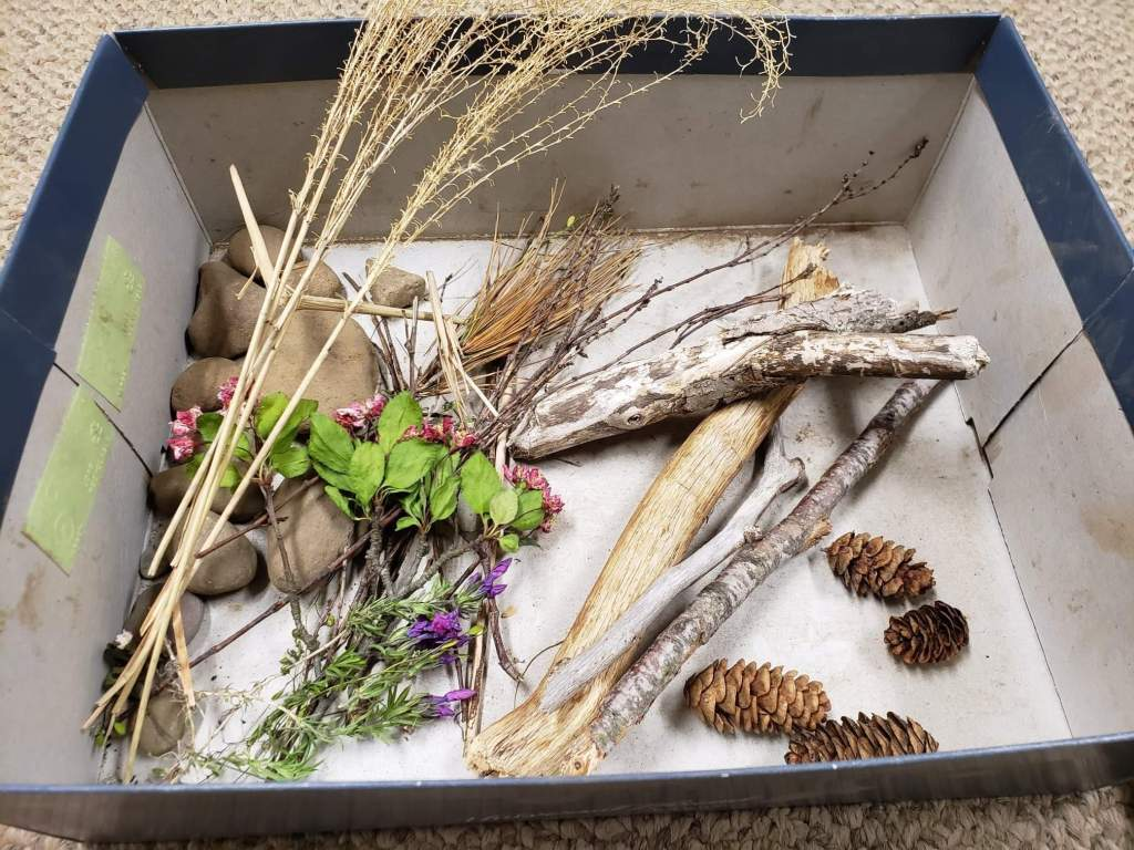 a shoe box with items from nature placed inside, such as stick, flowers, pebbles, pinecones and tall dry grass.